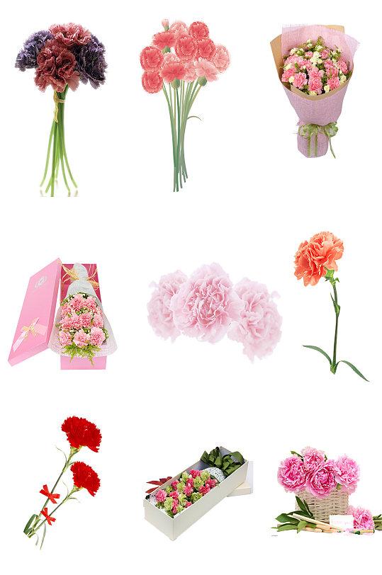 花朵康乃馨新鲜鲜艳 母亲节素材元素-众图网